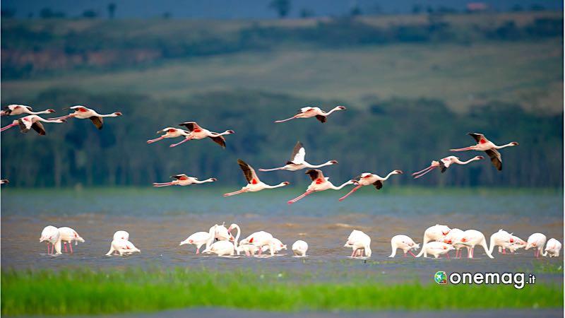 Kenya, LagoNakuru