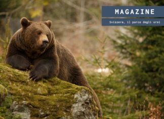 Svizzera, presto aperto il parco interamente dedicato agli orsi