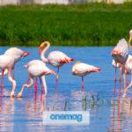 Fenicotteri in Sardegna | Dove trovare i fenicotteri rosa in Sardegna