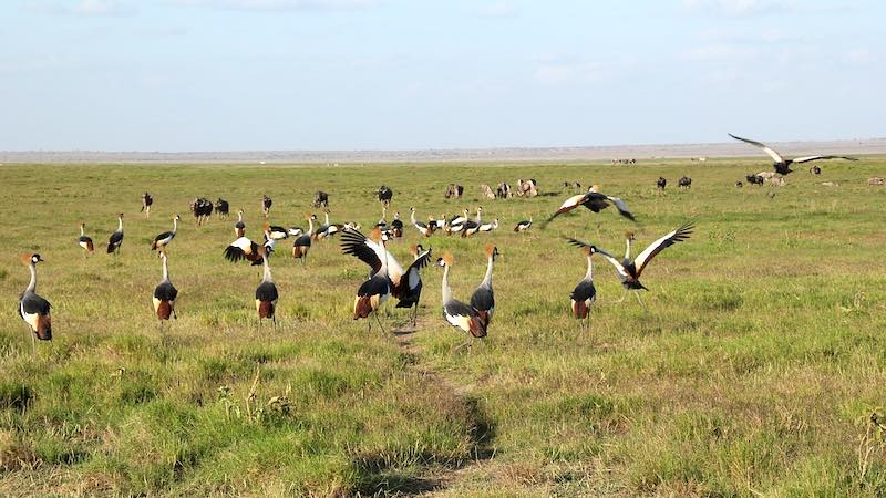 Parco Nazionale di Amboseli, Kenya