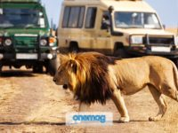 Parco Nazionale di Amboseli, safari in Kenya