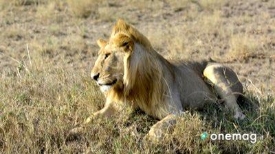 Visitare Parco Nazionale Amboseli