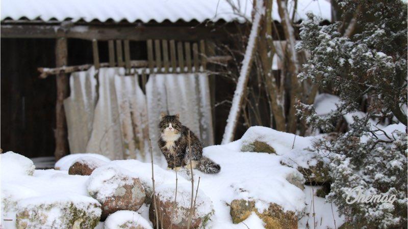 Saaremaa in inverno