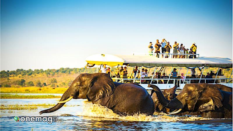 Guida del Botswana, elefanti osservati da una barca turistica