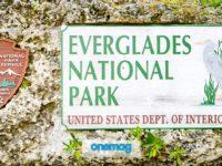 Everglades National Park, cosa vedere nel parco creato da Roosevelt