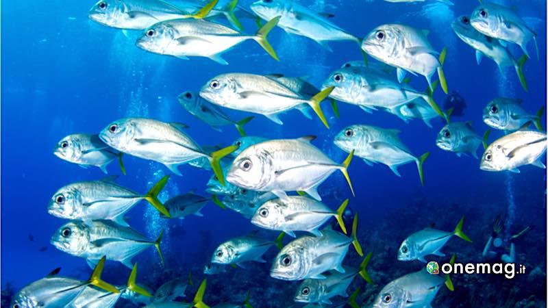 Little Cayman, vita marina