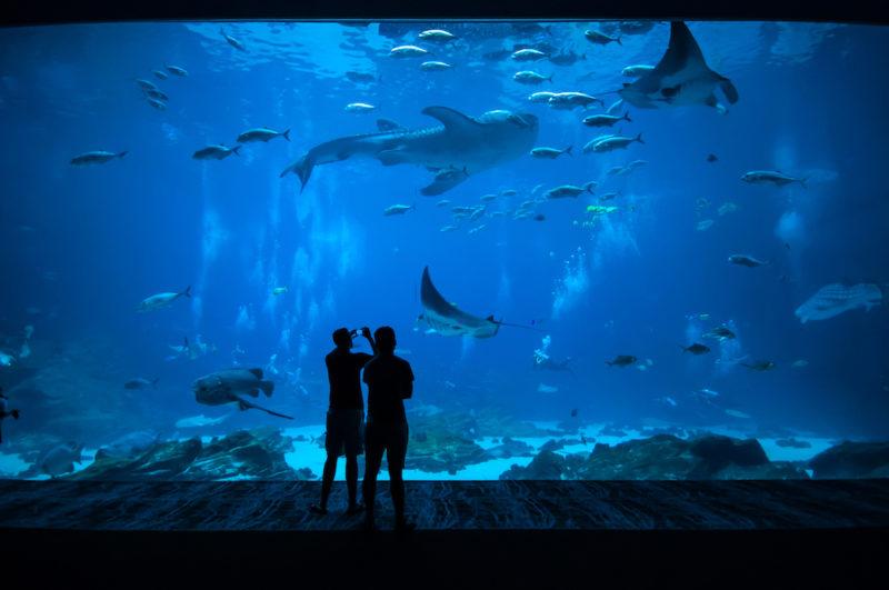 Monterey Bay Aquarium, vista sull'acquario
