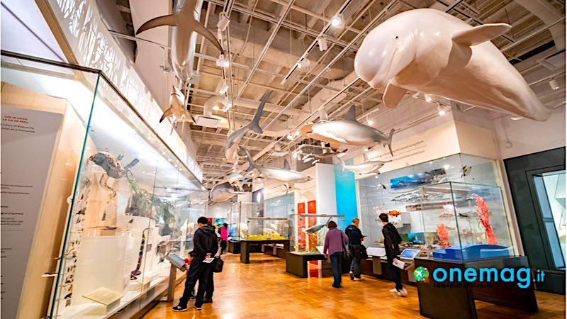 Royal Ontario Museum, interno