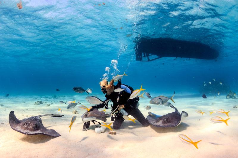 Stingray City, Isole Cayman