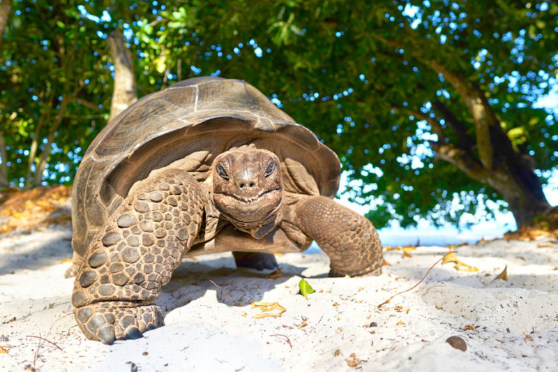 Spiaggia Seychelles