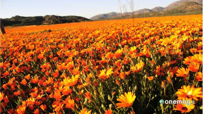 Sudafrica, Namaqualand