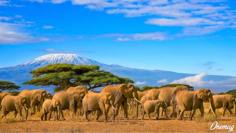 I migliori parchi naturali della Tanzania