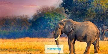 I migliori luoghi da visitare in Zambia