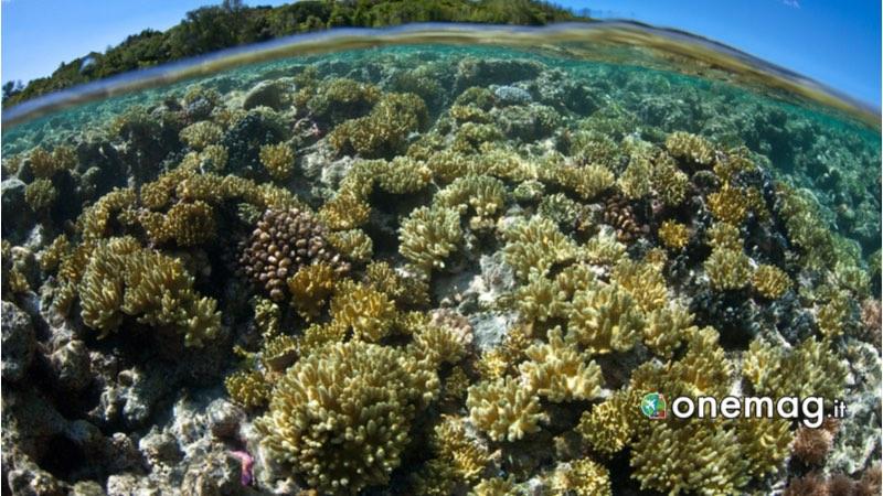 Isola di Ngemelis - Repubblica di Palau