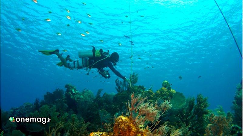 Cayman Brac, immersione