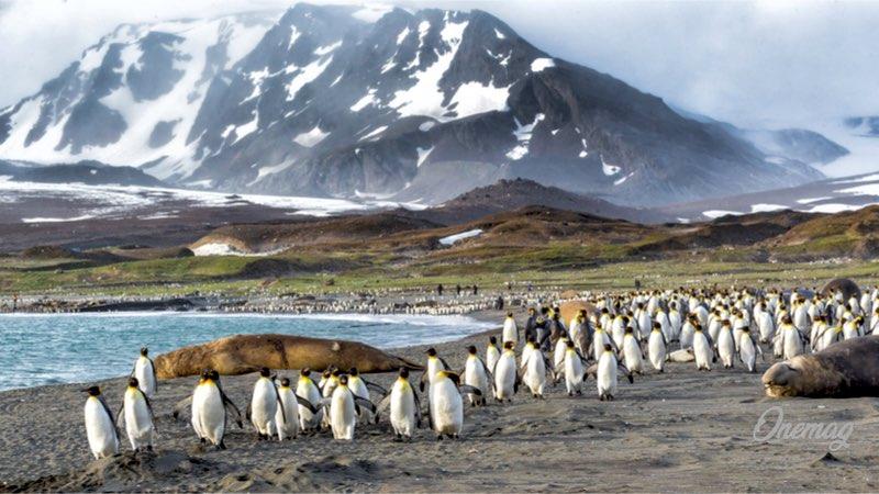 Le isole Falklands e i pinguini