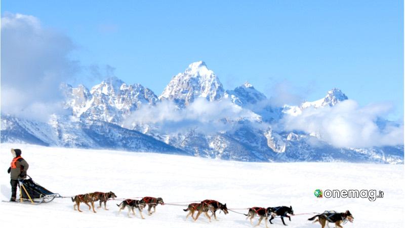 Groenlandia, slitta trainata da cani