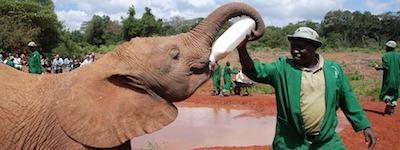 visitare kenya