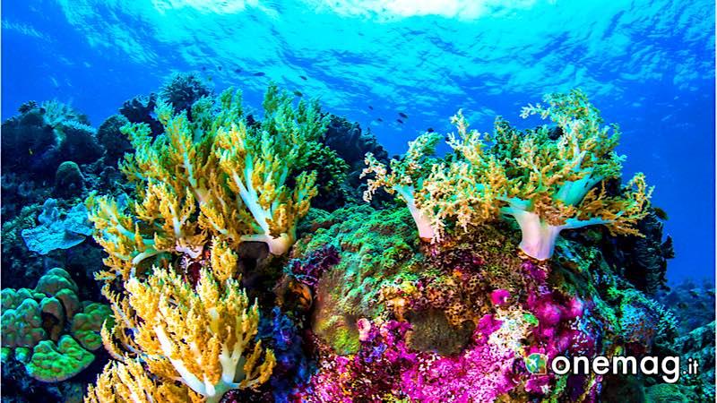 Barriera corallina, Los Roques