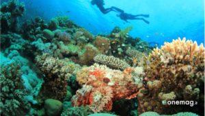 Mar Rosso, immersioni
