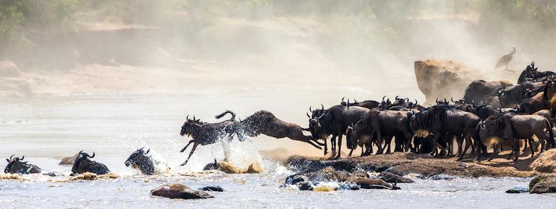 Kenya, Masai Mara, la Grande Migrazione
