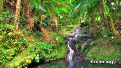 Cosa vedere a Portorico, El Yunque National Forest