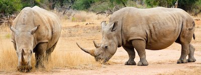 visitare swaziland