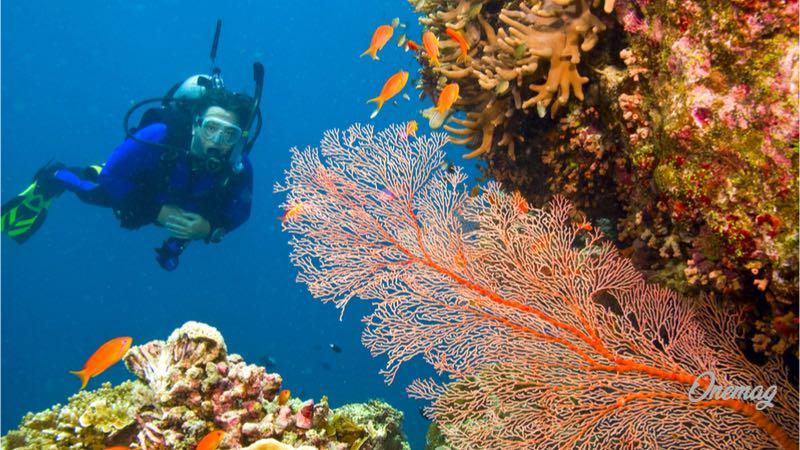 Meraviglie del mondo, Grande Barriera Corallina, Australia