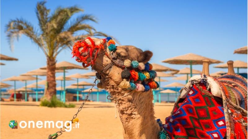 Hurghada, guida turistica