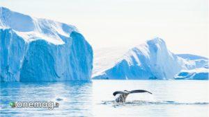 Ilulissat, ghiacciaio
