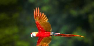 Parco della Guyana