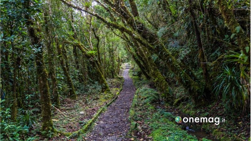Podocarpus, Ecuador