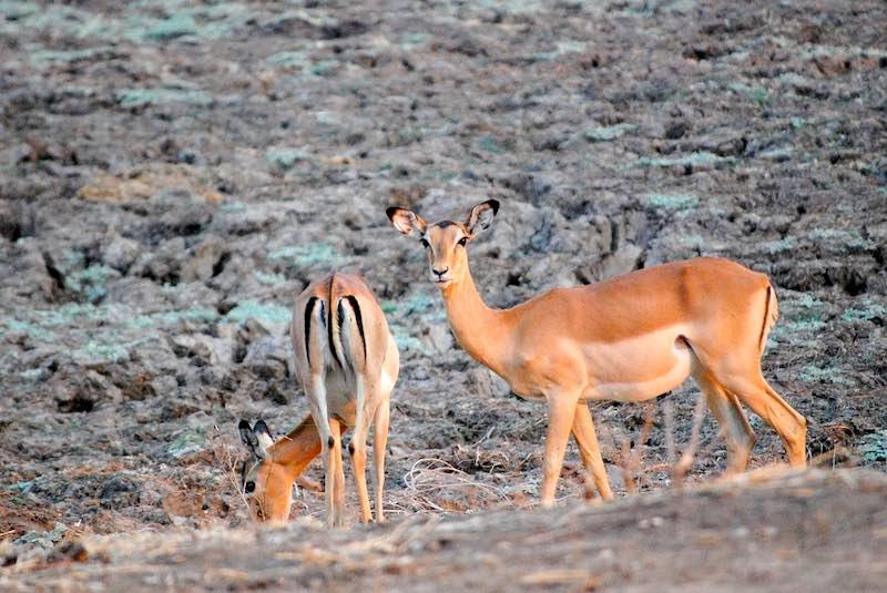 Le attrazioni naturali dello Zambia