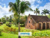 Cosa vedere nel Suriname, l'incontaminata terra nel Sud America