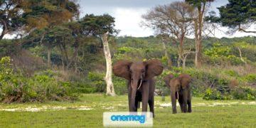 Vacanze avventurose in Gabon