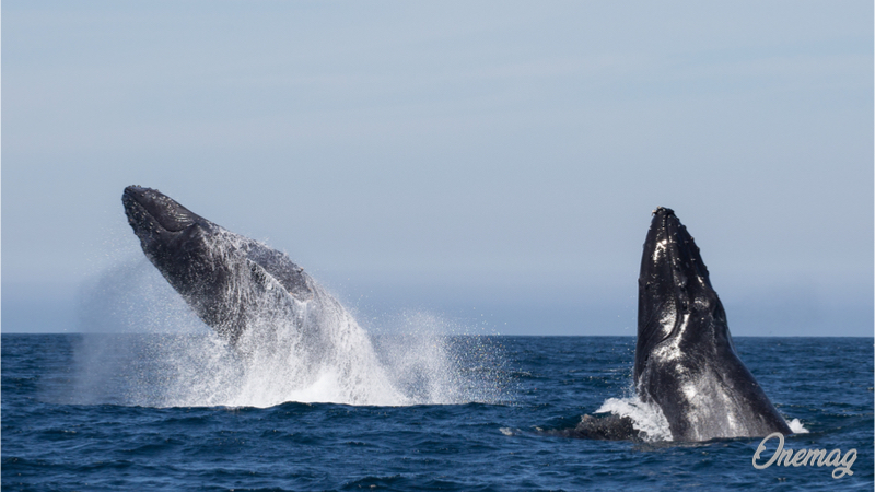 Colombia, Whale-Watching
