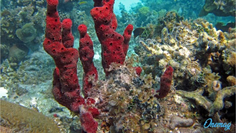 Colombia, barriera corallina Providencia