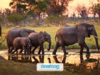 Guida alla natura del Botswana