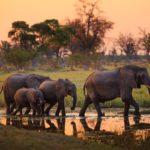 Botswana, dove la natura diventa un'opera d'arte