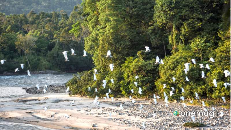 Brasile, foresta amazzonica