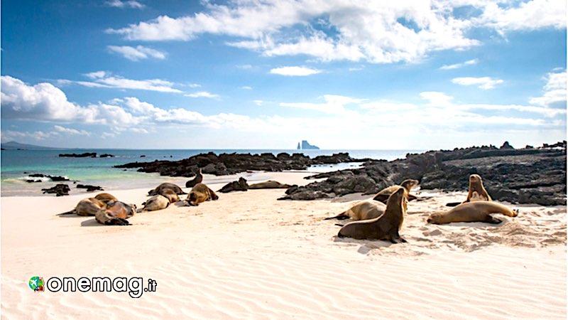 Ecuador, isole Galapagos
