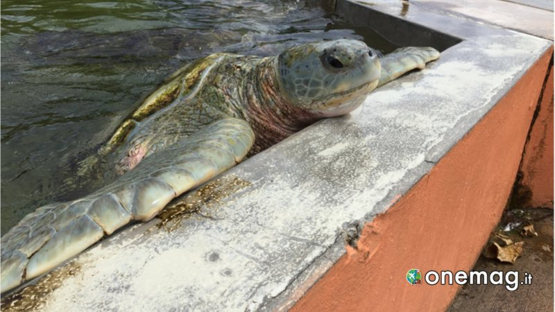 Cayman Turtle Farm, George Town