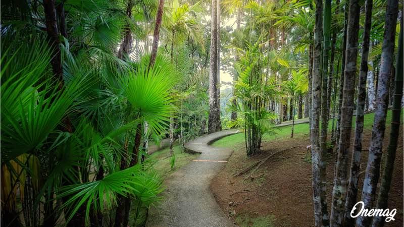 Visitare giardino di Balata a Fort-de-France