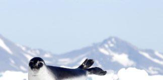 Cosa non perdere in Groenlandia