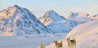 Parco Nazionale della Groenlandia, il più grande del mondo