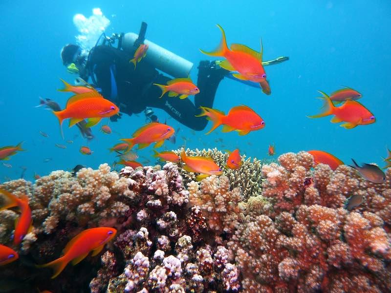 Immersioni nel Mar Rosso