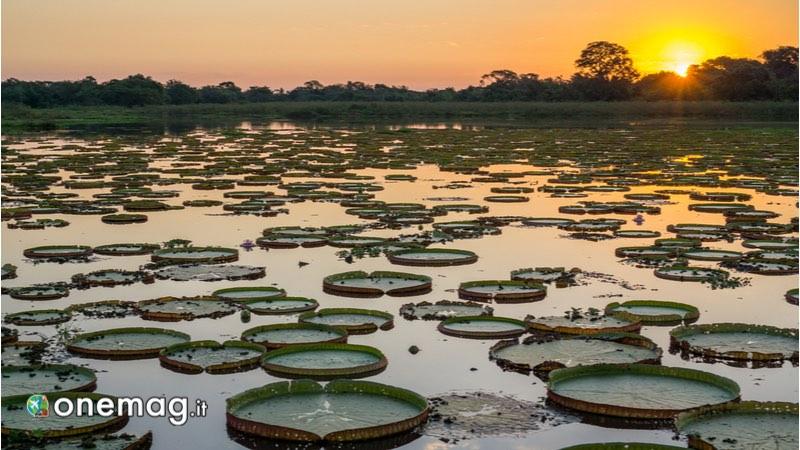 Pantanal, Brasile