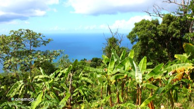 Virgin Islands, natura