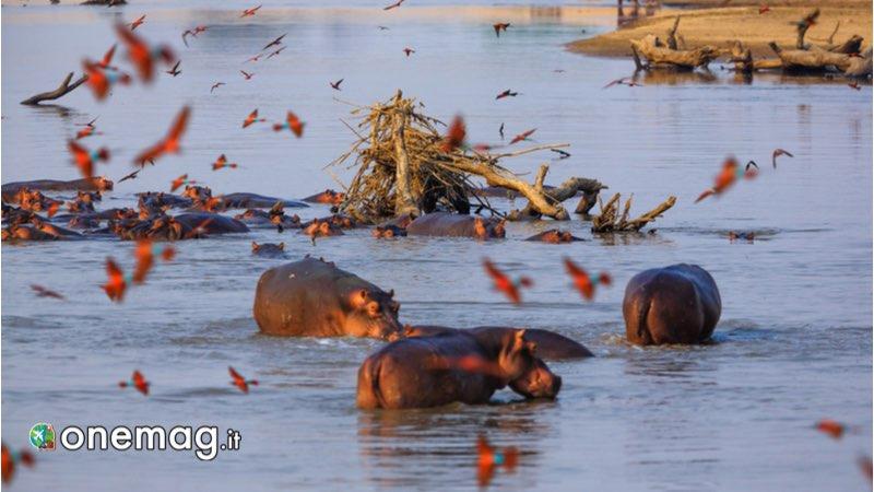 Parco nazionale di South Luangwa