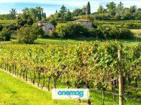 Valpolicella, tra Verona ed il Lago di Garda con gusto